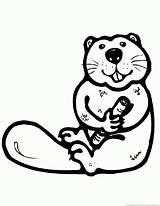 Beaver Animal Coloring Pages Zoom sketch template
