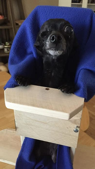 senior dogma program dogma animal rescue