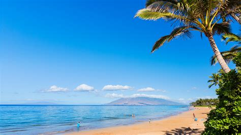 wallpaper maui hawaii beach ocean coast palm sky