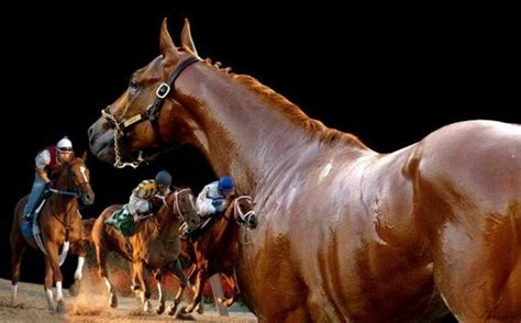 tvg racing form 3247 best racehorses images on pinterest horse racing