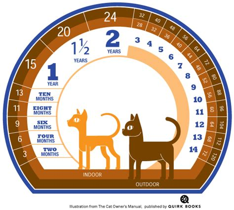 cat years chart how to calculate cat years to human years catster