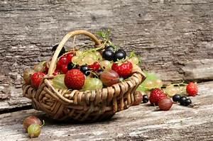 Obstfliegen Bekämpfen Hausmittel : hausmittel gegen obstfliegen so besiegen sie die plagegeister k niglich alt werden ~ Watch28wear.com Haus und Dekorationen