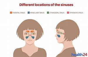 A Quick Guide To Sinus