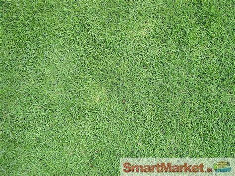 Vietnam Grass Seeds Packets