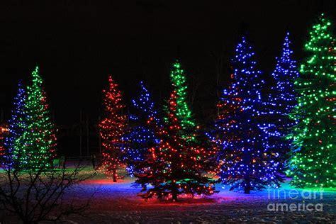 how to do christmas lights on trees christmas light tree ideas christmas decorating