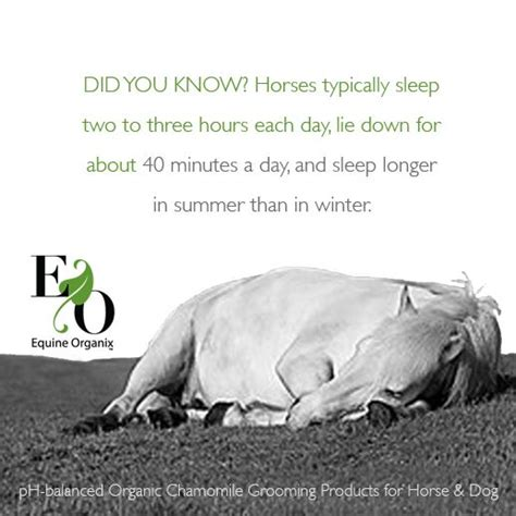 horse sleep facts horses long care tips fun