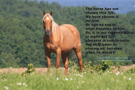 horse endometritis mares separation anxiety horsemanship endometriosis calm pregnant