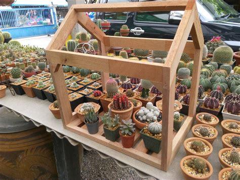 Grandma Garden (สวนคุณยาย น้องข้าวปั้น): โรงเรือนแคคตัส ...