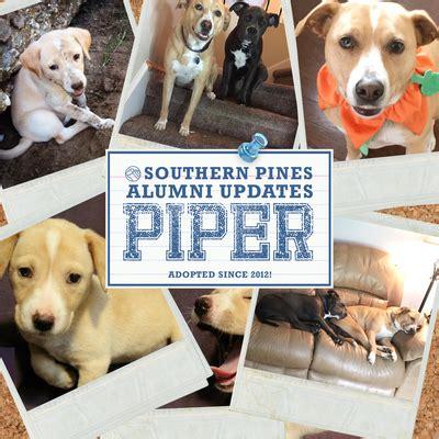 alumni album southern pines animal shelter