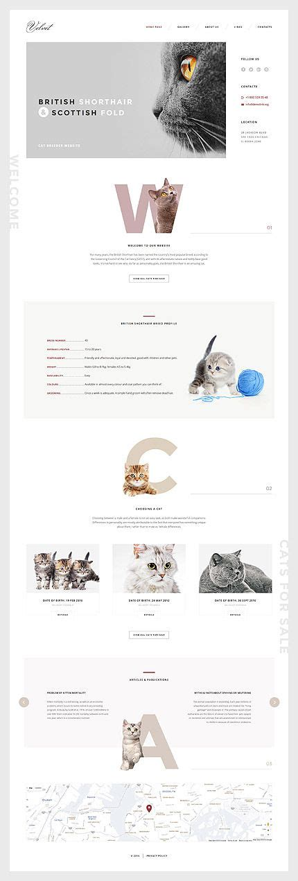 desarrollo web templat template 58574 ensegna themes web designs inspiration