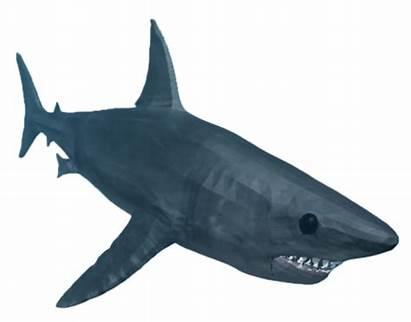 Shark Roblox Bite Wiki Fandom Sharkbite Codes