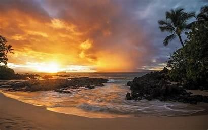 Sunset Palm Beach Sand Trees Landscape Gold
