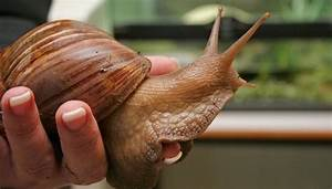 How To Start Snail Farming In Nigeria  U00bb The Beginners Guide