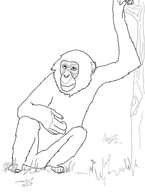 printable chimpanzee coloring pages  kids