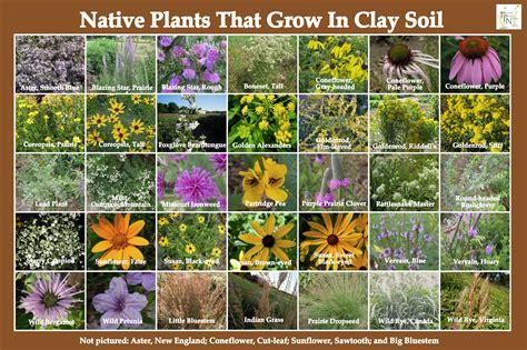 plants that grow in clay soil plants that grow in clay soil pleasant prairie nursery