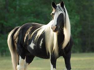 White And Black Horse Animal Pictures
