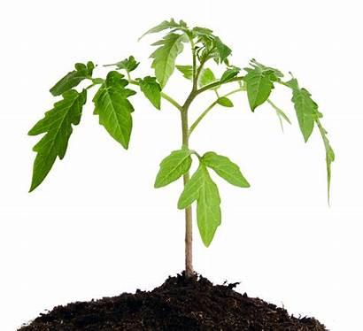 Soil Healthy Plant Plants Growing Mender Ecosystem