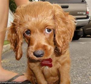 Cute Puppy Eyes - funnypuppysite.com