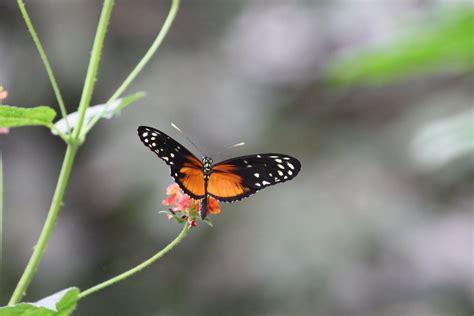kleiner schmetterling kleiner schmetterling foto bild tiere zoo wildpark falknerei insekten spinnen bilder