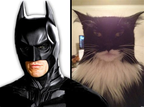 A Cat That Looks Like Batman And Another Masquerading As Two