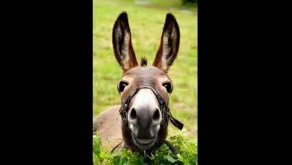 donkey birthday greeting  friend    friends ecards