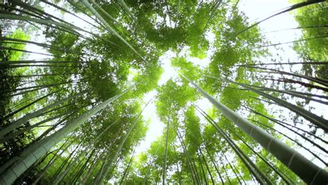 Canopy Environment by Canopy Environment Kyoto Bamboo Forest