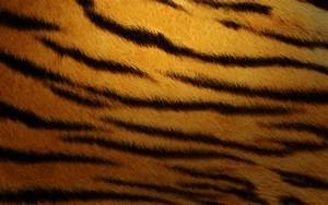 Tiger Skin Wallpapers | HD Wallpapers | ID #11106