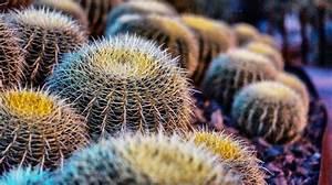 Comment Entretenir Un Cactus : plante grasse fleurs s lection des plus belles plantes ~ Nature-et-papiers.com Idées de Décoration