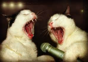 singing cats singing cats dolphy and panchito blossom boots