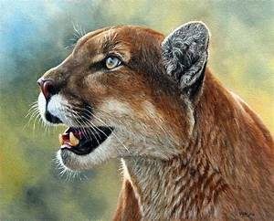 Mountain Lion Painting for sale – ebay | How to Draw and ...