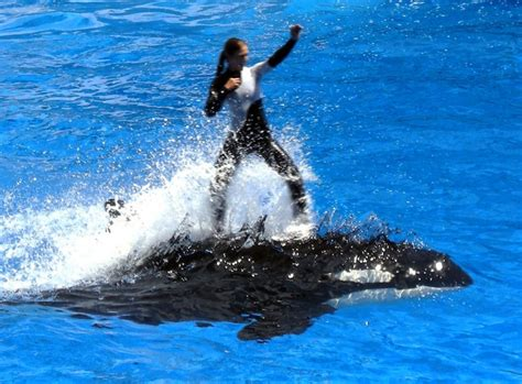Former Trainer Says Killer Whale Captivity Causes Attacks