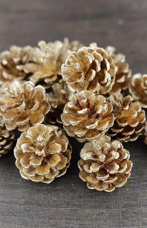 gold pine cones 5lb 17 22 cones