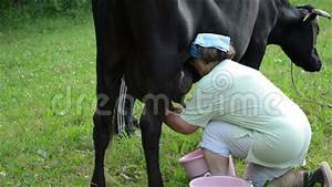 Farmer Hand Milk Cow Stock Video - Video: 37352947