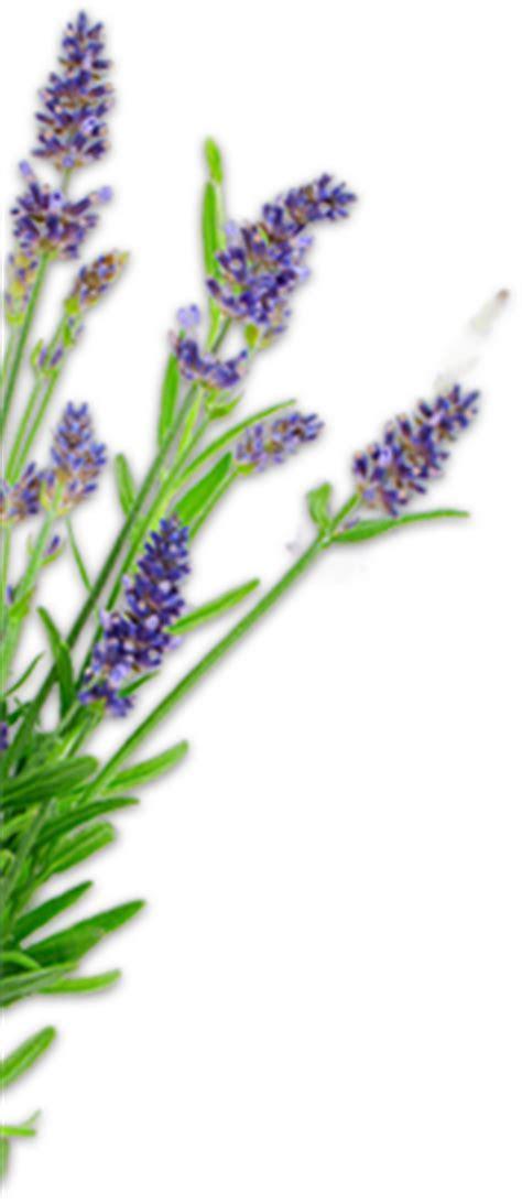 Sequim Lavender Gifts: Gift Shop   Purple Haze Lavender