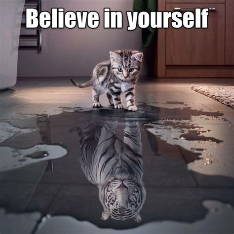 Believe In Yourself   Cat Humor