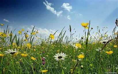 Spring Desktop Flowers Wallpapers Background Meadow Backgrounds