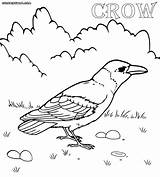 Crow Coloring Pages Line Drawing Printable Colorings Sketch Animal Getdrawings Template sketch template