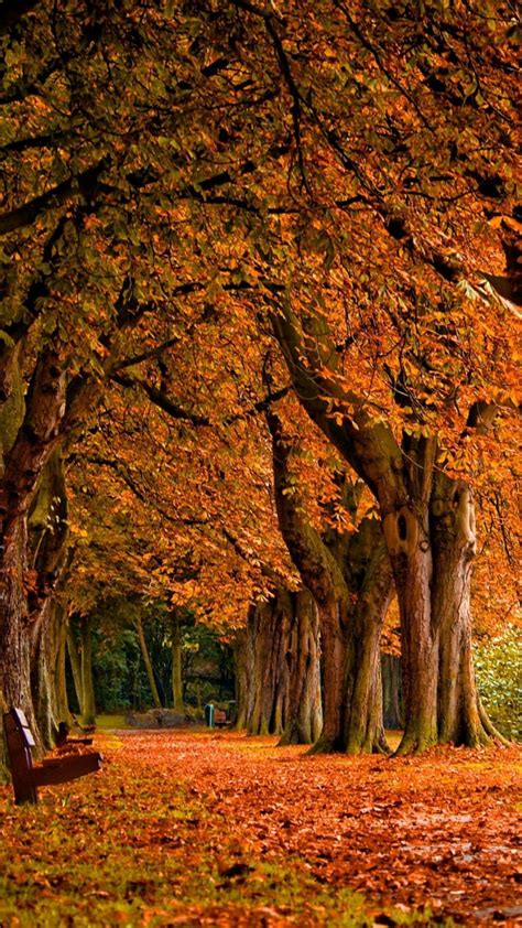 Autumn Wallpapers For Phone Hd by Autumn Hd Wallpapers For Iphone 7 Wallpapers Pictures