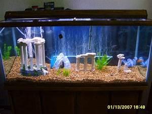 Freshwater Aquarium Themes