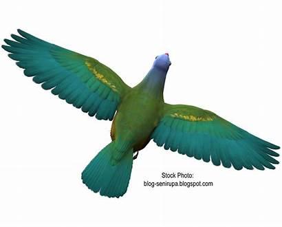 Burung Gambar Resolution
