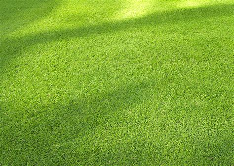 fescue grass types turf type tall fescue l shade tolerant grass seed turf merchants