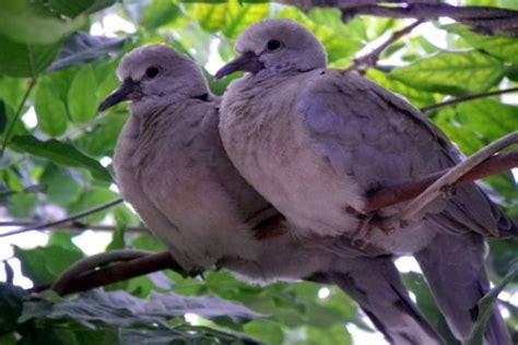 30 Eye Catching Doves Photography Colorlava