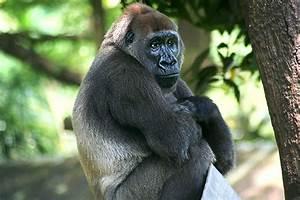 top, 10, wild, animals, disappearing, faster, than, we, u0026, 39, re, saving