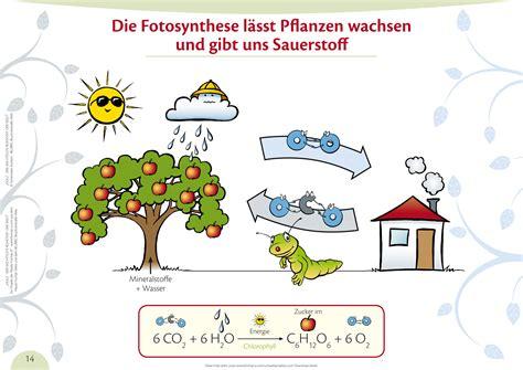 Pflanzen Die Giftstoffe Aus Der Luft Filtern by Pflanzen Die Giftstoffe Aus Der Luft Filtern Pflanzen Fr