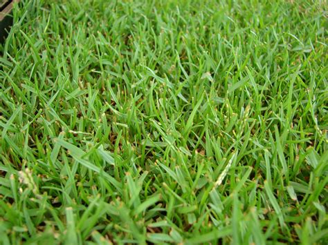 The 5 Best Grass Types For Baton Rouge, La Lawns