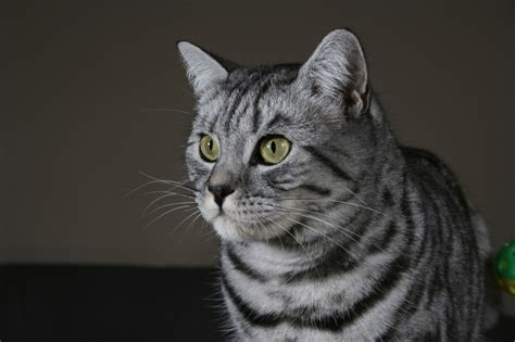 professional cat photography chameleon web services