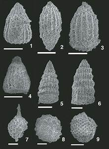 Scanning Electron Photomicrographs Of Radiolarian Fossils