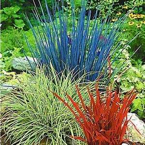 Tropische Pflanzen Kaufen : diese ziergr ser sorgen im herbst f r farbe pflanzen gras und garten ~ Watch28wear.com Haus und Dekorationen