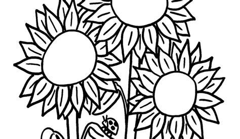 cara mewarnai bunga kembang sepatu 15 gambar