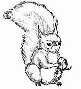 Squirrel Coloring Pages Printable Animal Place sketch template